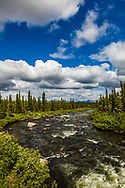Brushkana Creek, Denali Highway, summer, afternoon