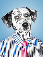 Dalmatian Businessman looking at camera