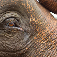 éléphants de Sumatra