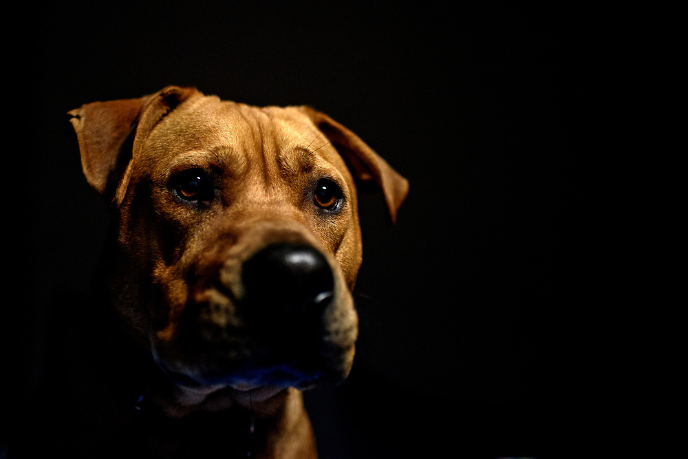 Washington, D.C. - January 21, 2017: Justin Gellerson's dog, Denver.<br /> <br /> CREDIT: Matt Roth