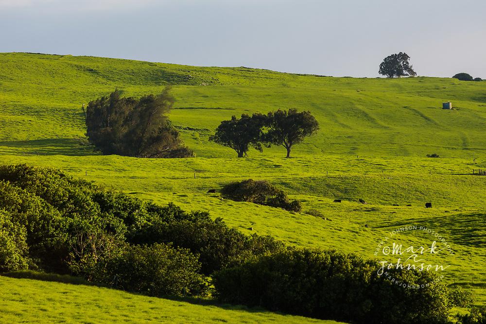 Verdant green grass pasture land near Waimea, Big Island, Hawaii
