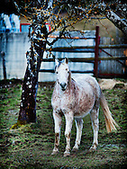 A friendly, shy, and muddy country horse in Dingy-Saint-Clair, France.