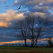 Dramatic sky and clouds at dusk provide the backdrop for trees and fence in rural Loudoun County, Virginia