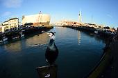 Coast to City: Cormorants in the UK