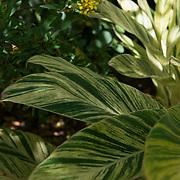 Queen Elizabeth II Botanic Park. Grand Cayman Island.
