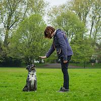 Dog training teaching to sit