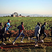 Kenyan long distance runners train in the high altitude village of Iten. The recent post-election violence in Kenya disrupted many runners' training programs, but they are now back in training for the upcoming Olympic games in China and other international events.  /// ..Kenyan long distance runners go for a morning run in the high altitude village of Iten, in Kenya's rift valley.