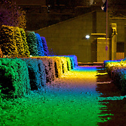 Multi-colored lights shine down on snow covered hedges in the Garden of the arts (Jardin