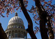 Idaho State Capital building and spring blossoms Boise Idaho