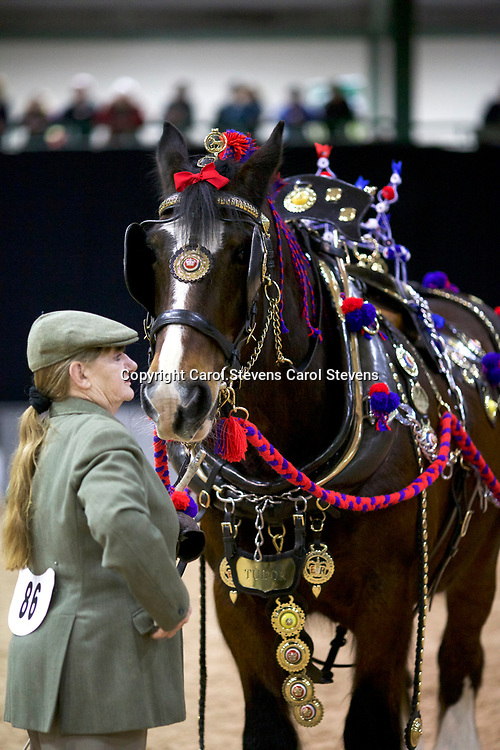 Maggie Smith and TRELOW TUDOR<br /> 3rd Decorated Harness Class<br /> with Judge, David Shardlow