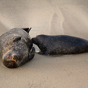 &quot;Evening nurse&quot; <br />