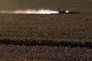 Uberlandia_MG, Brasil...Trator jogando inseticida na plantacao de algodao...The tractor putting insecticide in cotton plantation...Foto: MARCUS DESIMONI / NITRO