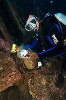 Diver examing pottery found on an unidentifed wreck, Manokwari, West Papua, Indonesia.