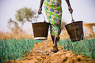 Subsistence farmer Habibou Kiendrebeogo walks across her small plot of land carrying water for her onion field.  She works on the land everyday and sells the produce at the local market to help support her five children.  <br /> <br /> Despite Habibou's hard work, and the quality of her produce, subsidised food production in developed nations reduces the value of her crop, and limits her income to less than one pound a day.<br /> <br /> Kolguingu&eacute;ss&eacute; village, southern Burkina Faso.