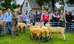 Biggar, South Lanarkshire, Scotland 23 July 2016<br /> <br /> Judging Bluefaced Leicester sheep in the show ring.<br /> <br /> (c) Andrew Wilson | Edinburgh Elite media
