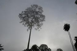 Trees at dawn. Alpha 4 Danum Valley, Malaysia, Spring 2008. Raleigh International environmental conservation project. Sabah, Malaysian Borneo