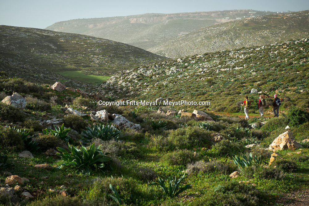 Palestine, March 2015. Hikers on the trail from Duma to Kafr Malek. The Abraham Path is a long-distance walking trail across the Middle East which connects the sites visited by the patriarch Abraham. The trail passes through sites of Abrahamic history, varied landscapes, and a myriad of communities of different faiths and cultures, which reflect the rich diversity of the Middle East. Photo by Frits Meyst / MeystPhoto.com for AbrahamPath.org