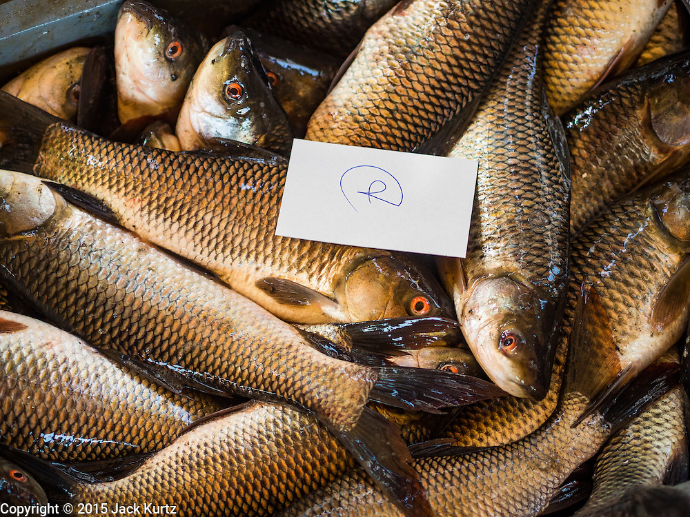 14 AUGUST 2015 - BANGKOK, THAILAND: Sorted and graded fresh water farm raised fish waits to be shipped to a customer at Saphan Pla fish market in Bangkok. Saphan Pla fish market is the wholesale fish market that serves Bangkok. Most of the fish sold in Saphan Pla is farmed raised fresh water fish. The market is open 24 hours but it's busiest in the middle of the night and then again from about 7.30 until 11 in the morning.       PHOTO BY JACK KURTZ