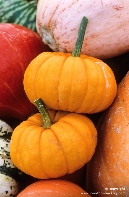 Pumpkin 'Mini Jack-be-Lantern'