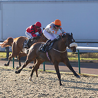 Lingfield 11th December 2012