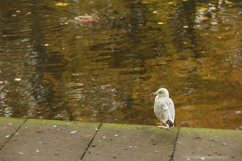 A seagull in front of water in the Autumn sunshine