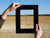 Woman framing tree in desert close-up of hands and frame
