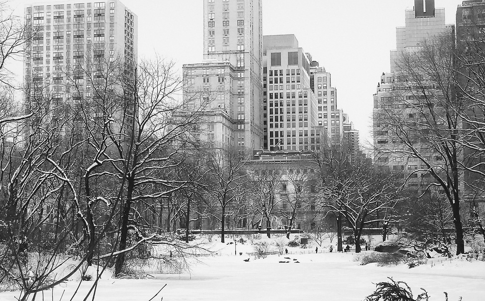 Central park in winter 2010