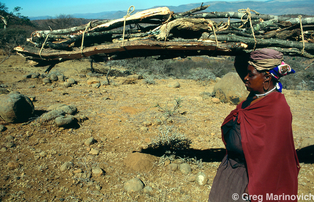 Msinga KwaZulu Natal  September 1995. A woman carried firewood from a distant area to her home in the Msinga area of KwaZulu Natal. Msinga is one of South Africa';s most impoverished areas and most of the men travel to the Gauteng or Durban areas for work.