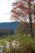 Løvtrær pm høsten. Rogn og bringebærkratt.