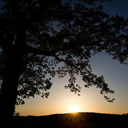The sun sets behind an oak tree in Grafton, Massachusetts.  Woircester County.