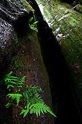 Ouro Preto_MG, Brasil...Parque Municipal das Andorinhas em Ouro Preto, Minas Gerais...Andorinhas Municipal Park in Ouro Preto, Minas Gerais...Foto: JOAO MARCOS ROSA / NITRO