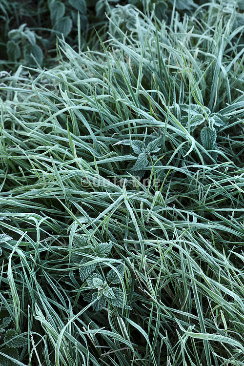 grass covered with a light frost
