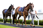 Global Agreement ridden by Sam Hitchcott and trained by Milton Harris and Lafontaine ridden by Nicola Currie and trained by Sylvester Kirk - Mandatory by-line: Robbie Stephenson/JMP - 18/07/2020 - HORSE RACING- Bath Racecourse - Bath, England - Bath Races 18/07/20
