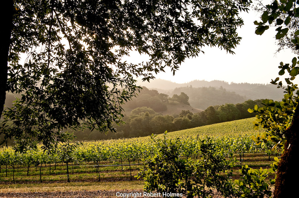 Chalk Hill, Sonoma County, California
