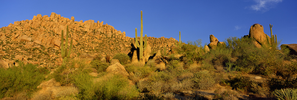 Saguaro cactus grow among granite boulders in the Sonoran Desert of southern Arizona