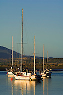 Sailboats anchored in Morro Bay, California