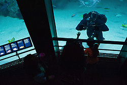 181004-N-XP344-1159 BALTIMORE (Oct. 4, 2018) A United States Naval Academy Navy diver interacts with visitors while diving in an exhibit at the National Aquarium as part of Maryland Fleet Week and Air Show Baltimore. MDFWASB is Baltimore's celebration of the sea services and provides an opportunity for the citizens of Maryland and the city of Baltimore to meet Sailors, Marines and Coast Guardsmen, as well as see firsthand the latest capabilities of today's maritime services. (U.S. Navy photo by Mass Communication Specialist 2nd Class Victoria Kinney/Released)