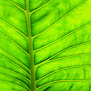 macro of green leaf cropped to square format