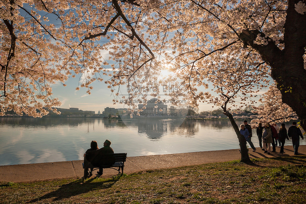 A couple enjoys the cherry tree blossoms along the Tidal basin with the Jefferson Memorial in Washington, DC.