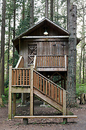 The treehouse in Redwood Park in Surrey, British Columbia, Canada.  The original treehouse was built by Peter and David Brown in 1878.