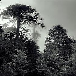Paisaje & Naturaleza