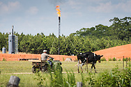 May 25, 2014, McDaniel's Dairy Farm, just outside the city limits of Kentwood LA, next to a Goodrich Petroleum frack site. The site is in the Tuscaloosa shale region which is in Louisiana and Mississippi. Larry McDaniel, the farm's owner has leased his land to another company that is fracking under his land. The Goodrich site isn't fracking under his land, but toward the north under property he doesn't own.  He doesn't see any problems with the fracksite next to his home yet and welcomes the fracking industry; however, he is monitoring his cows behavior, which hasn't changed since the work began a few months ago, according to Daniels. He had concerns before the project began about his well water, but was assured by local officials his water source is not at risk.