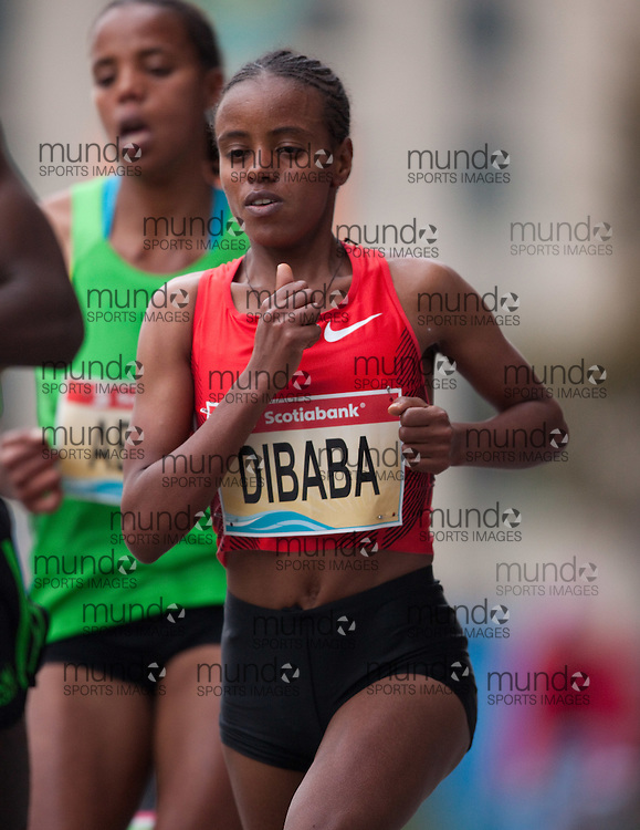 Toronto, Ontario ---11-10-16--- Mare Dibaba competes in the Scotiabank Toronto Waterfront Marathon, October 16, 2011..GEOFF ROBINS Mundo Sport Images