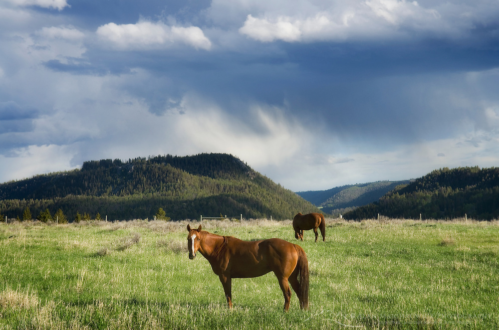 Storm clouds passing over a horse in a pasture of the Madison River Valley of Montana