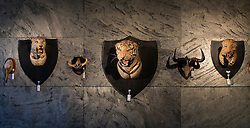 © Licensed to London News Pictures. 17/11/2016. Billingshurst, UK. A tiger and two leopard heads are displayed with other animals at Summers Place Auctions ahead of their sale in their 'Evolution' Auction taking place on November 22, 2016 - which will also see a rare dodo skeleton up for sale.   Photo credit: Peter Macdiarmid/LNP