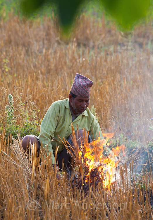 Nepali man burning a wheat field after harvest, Bardiya, Nepal