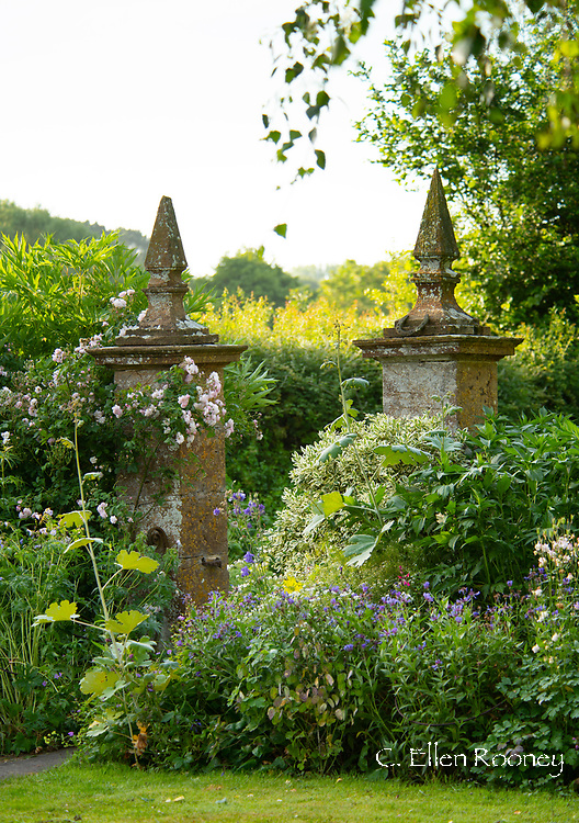 Rosa 'Blush Noisette' and herbaceous borders around stone pillars at the entrance toLower Severalls Farmhouse,  Crewkerne, Somerset, UK