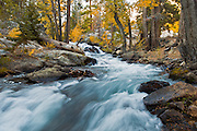cascading waterfall flowing through a canyon lined with aspens and fall foliage in the eastern sierra mountains of california near Lee Vining California