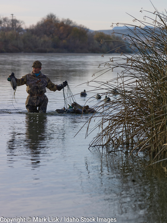 Duck hunting in the Big Bend section of the Snake river.