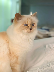 Choupette The Beloved Cat Of Karl Lagerfeld - 20 Feb 2019